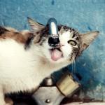 El Gato y La Gota